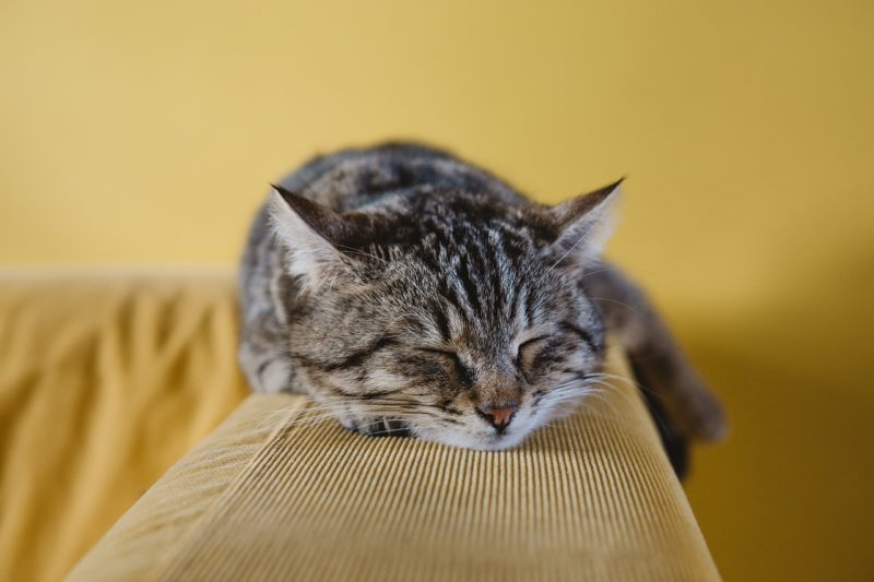 Clean T.O 4 Times Cleaning Services are Essential picture of cat on couch