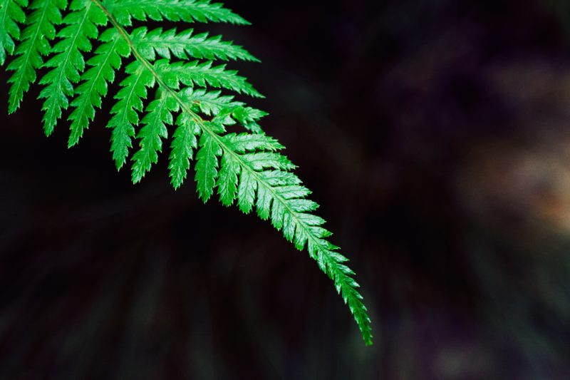 Clean T.O a-guide to indoor plants in small spaces picture of Boston fern