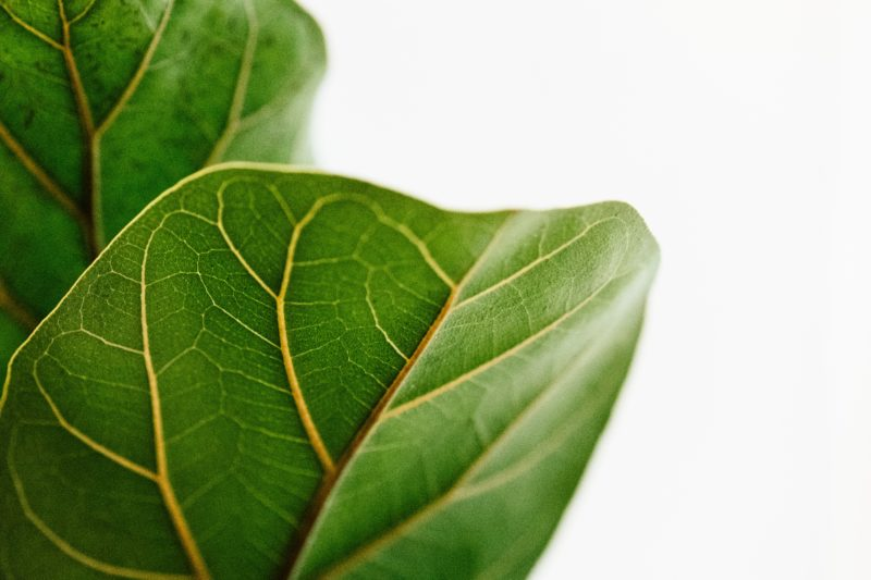 Clean T.O a guide to indoor plants in small spaces picture of green leaf