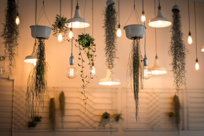 Clean T.O a guide to indoor plants in small spaces picture of hanging plants