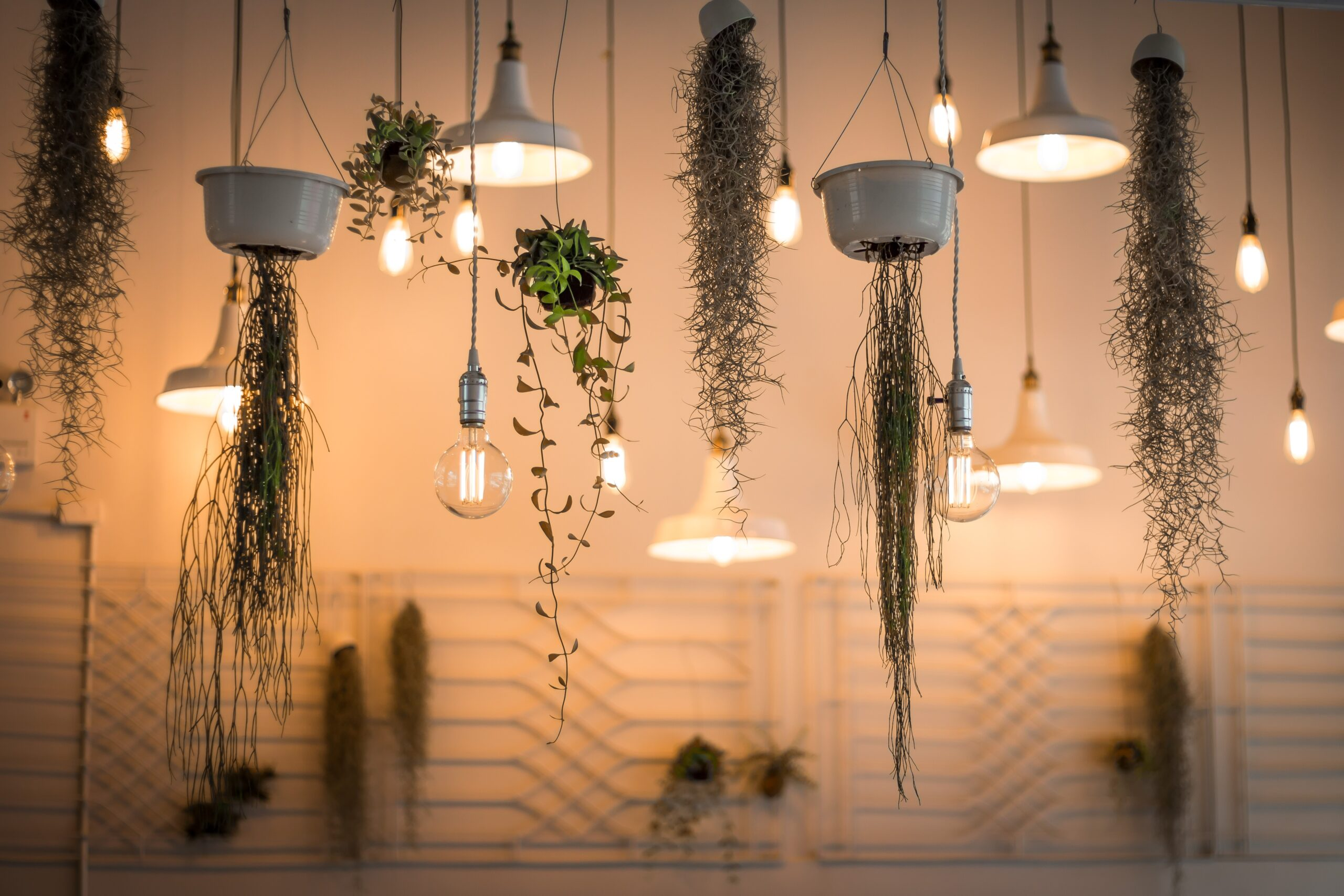 clean to a guide to indoor plants in small spaces picture of hanging plants