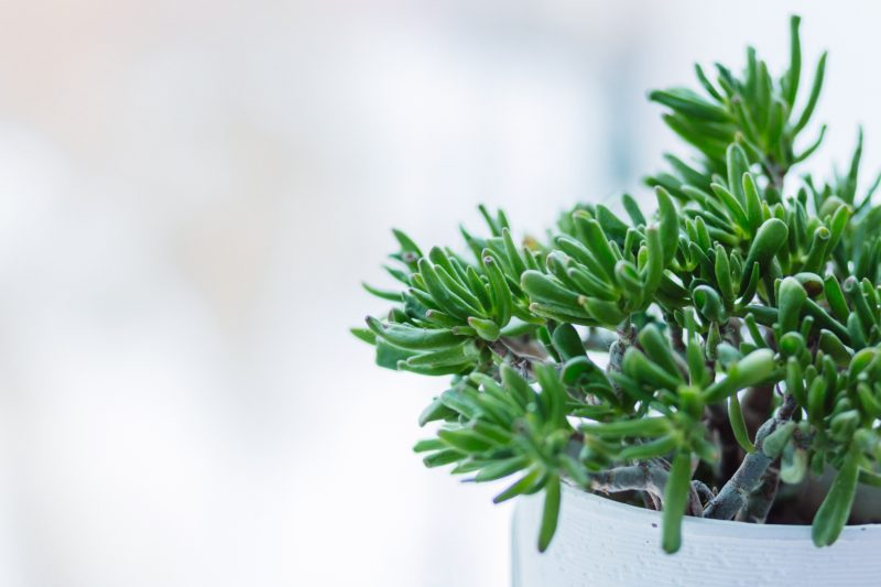 Clean T.O a guide to indoor plants in small spaces picture of plant 2