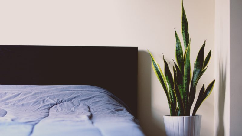Clean T.O a guide to indoor plants in small spaces picture of snake plant