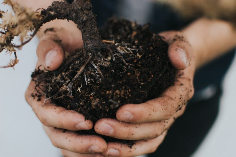Clean T.O a guide to indoor plants in small spaces picture of soil transfer
