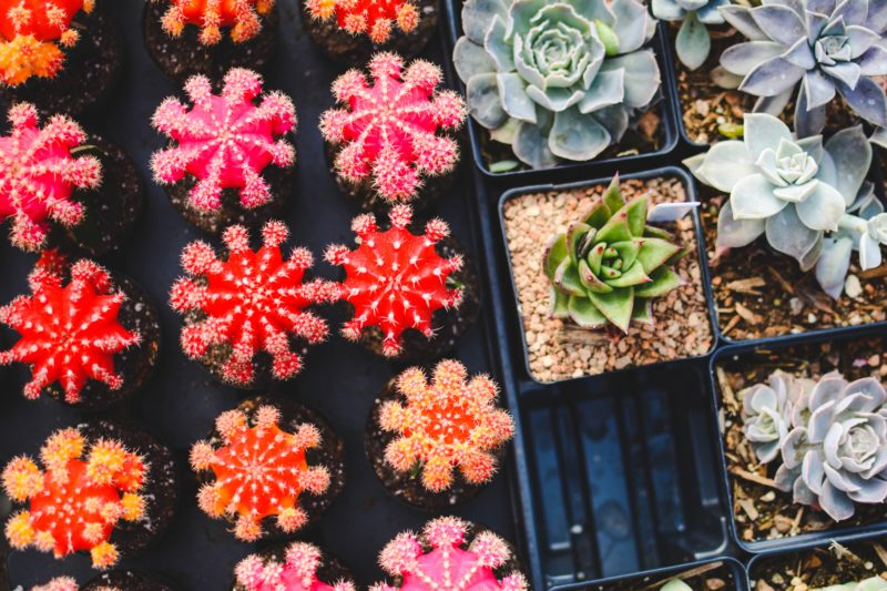 Clean T.O a guide to indoor plants in small spaces picture of succulents