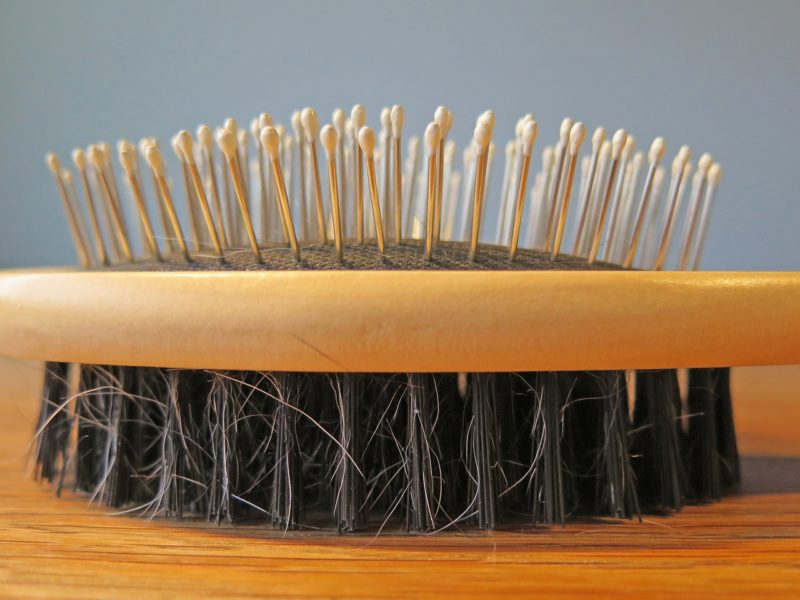 Clean T.O 4 Essential Cleaning Tips for Dog Owners in Condos Picture of Brush