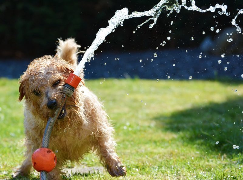 Clean T.O 4 Essential Cleaning Tips for Dog Owners in Condos Picture of Water Dog