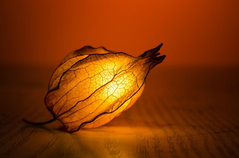 Clean T.O 4 Essentials of Decorating Your Condo for Fall Leaf Art