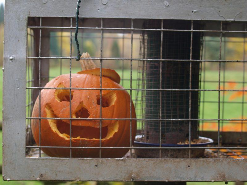 Clean T.O: 5 Tricks to Avoid Pumpkin Catastrophe Cage The Pumpkin