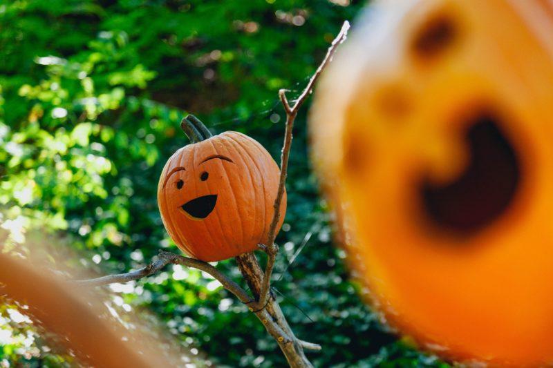 Clean T.O: 5 Tricks to Avoid Pumpkin Catastrophe Happy Pumpkins