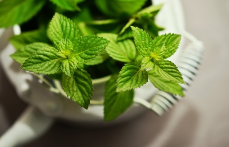 Clean T.O Ditch Your Coffee for Aromatherapy Picture of PepperMint