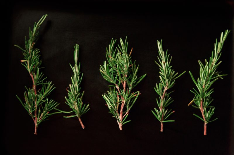 Clean T.O Ditch Your Coffee for Aromatherapy Picture of Rosemary