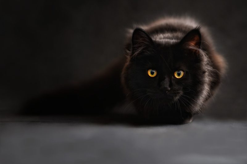 Clean T.O Got Kitty Litter Problems Picture of Black Cat