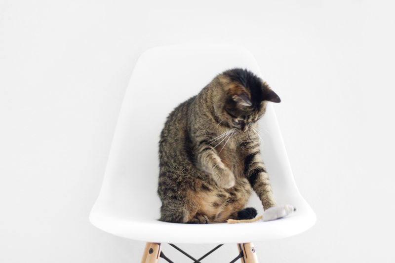 Clean T.O Got Kitty Litter Problems Picture of Cat On Chair