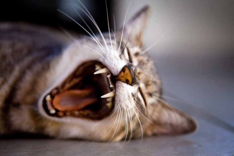 Clean T.O Got Kitty Litter Problems Picture of Yawn