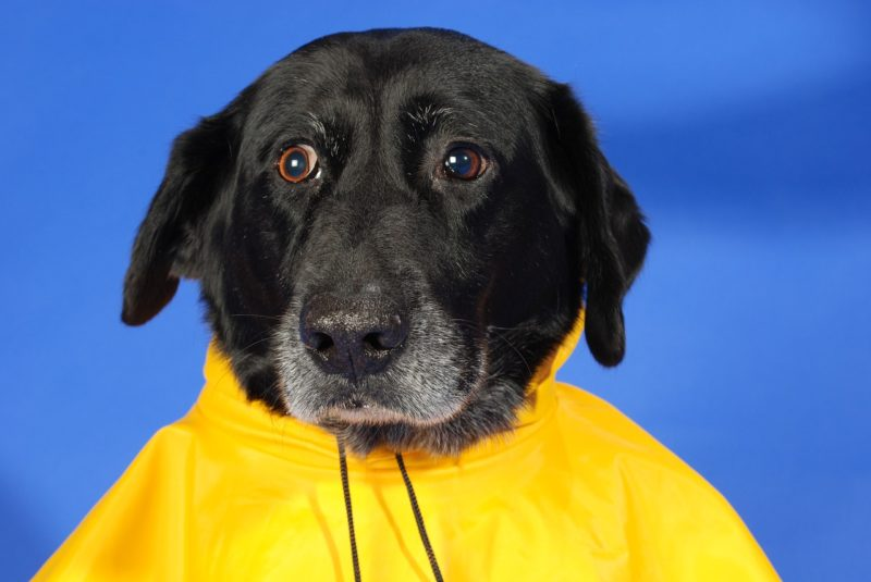 3 Tricks To Prevent A Soggy Doggy Rain Coat