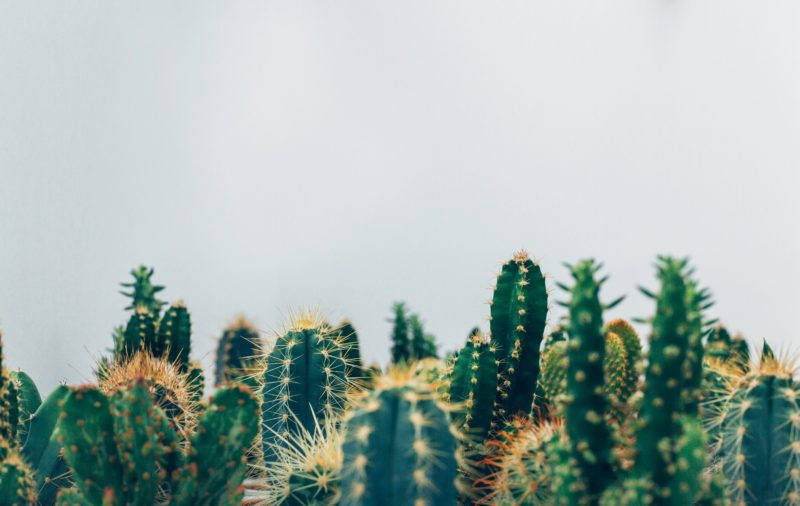 4 TLC Tips for Any Winter House Plant Cacti