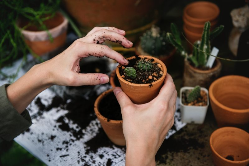 4 TLC Tips for Any Winter House Plant Soil