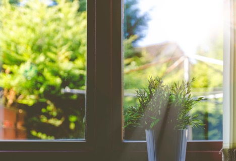 4 TLC Tips for Any Winter House Plant Window