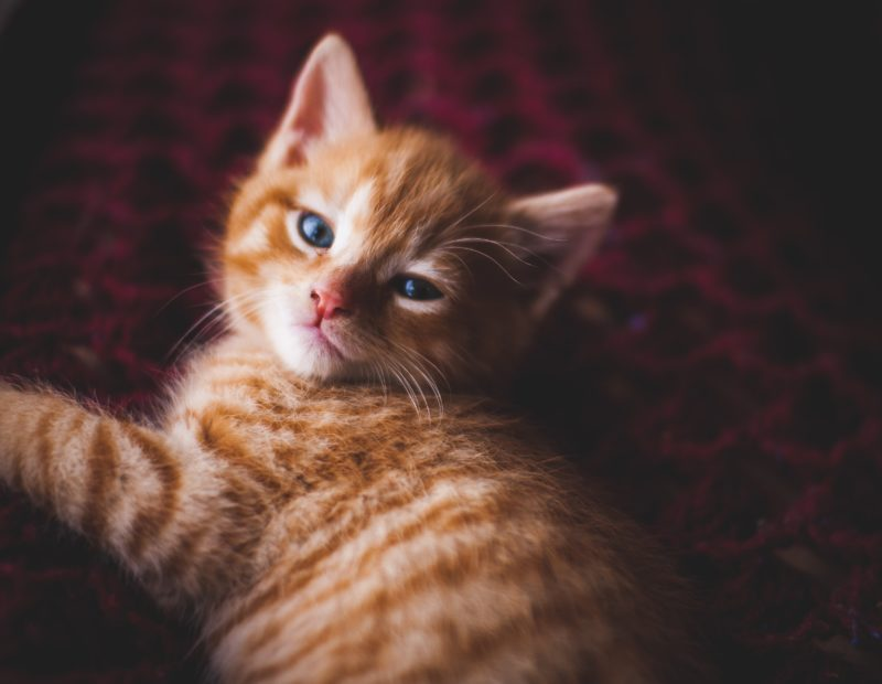 3 Clever Ways To Clean Your Aquaphobic Kitty Cute