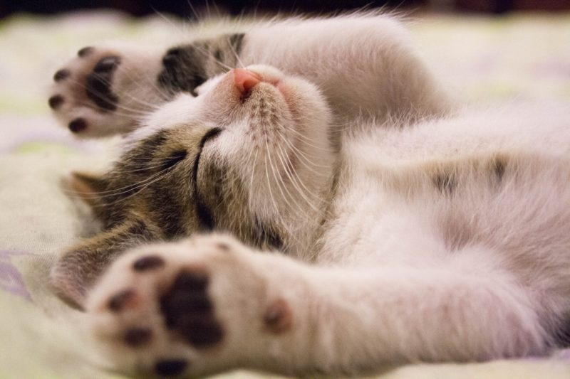3 Clever Ways To Clean Your Aquaphobic Kitty Relaxing