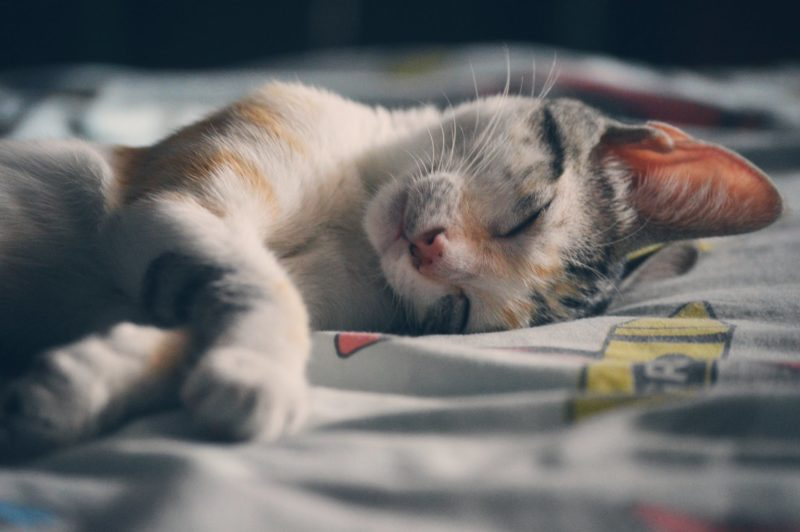3 Clever Ways To Clean Your Aquaphobic Kitty Sleeping