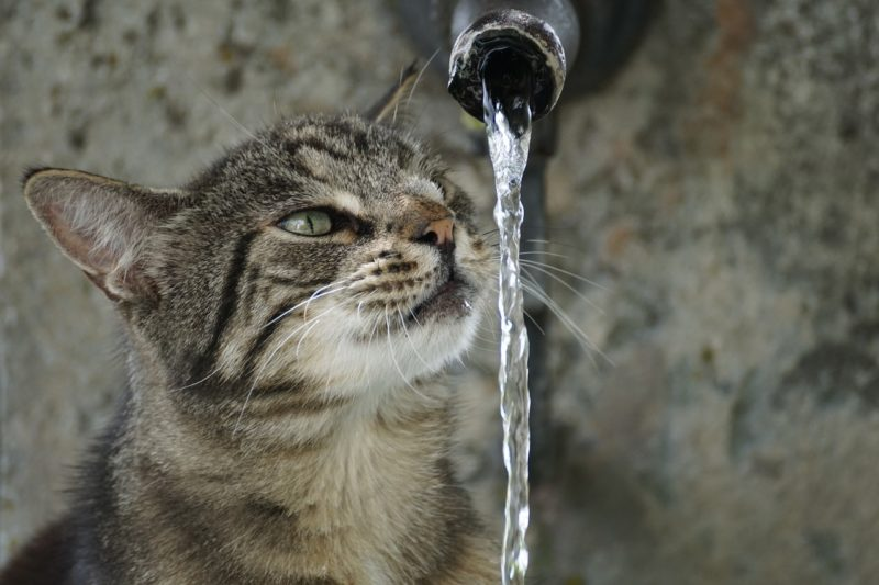 3 Clever Ways To Clean Your Aquaphobic Kitty Water