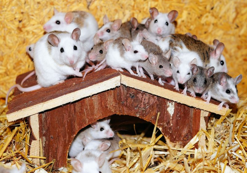 Evict The Mouse In Your House ASAP House