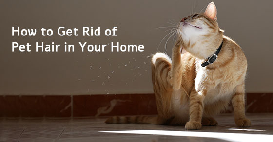 How to Get Rid of Pet Hair in Your Home