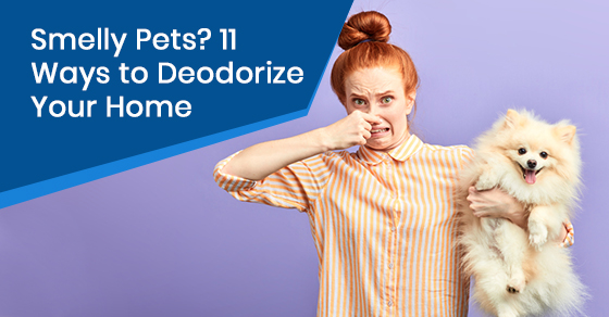 Smelly Pets? 11 Ways to Deodorize Your Home