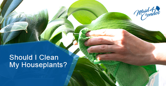 Is It Necessary to Clean My Houseplants?